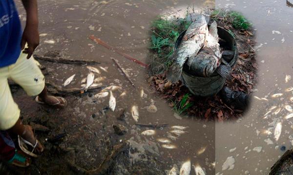 Asambleísta Campain exige comparecencia de autoridades frente a contaminación del río Esmeraldas